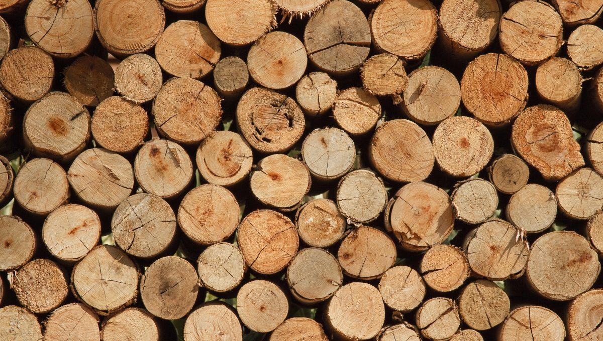 L'importance du bois cet hiver